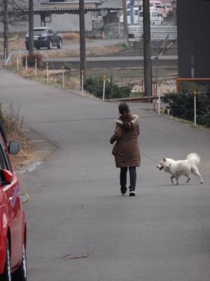 ハクの散歩