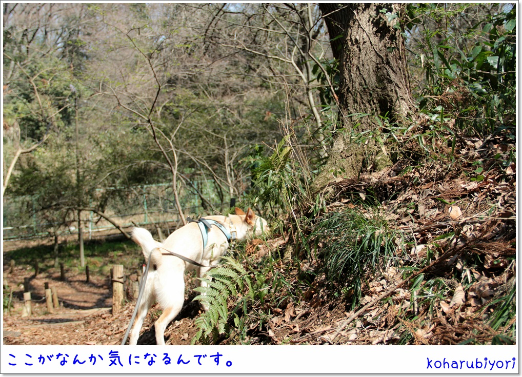 IMG_4292.jpg