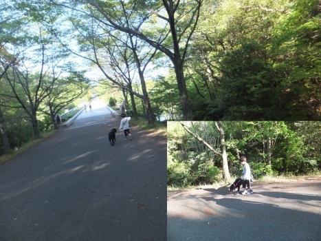 播磨中央公園