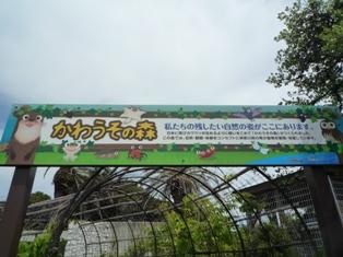 油壷マリンパーク(9)