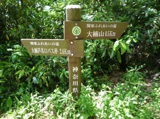大楠山(1)