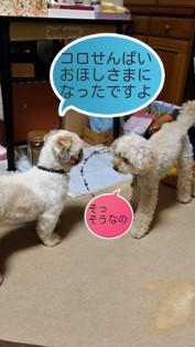 ブランとモコ(2)