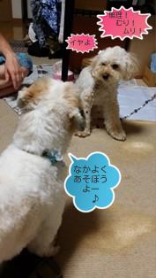 ブランとモコ(4)