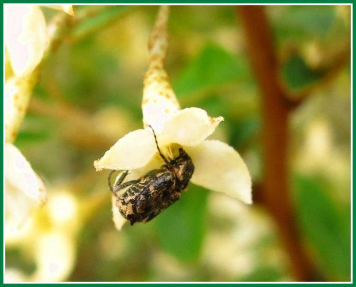 2014 4 17 富塚公園 トウグミ 5 昆虫