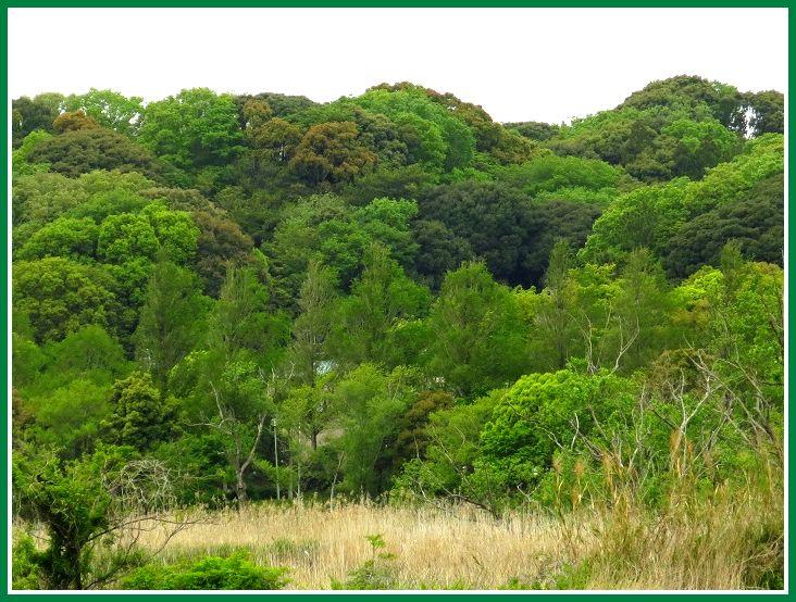 2014 4 22 佐鳴湖 北公園 新緑 2-3