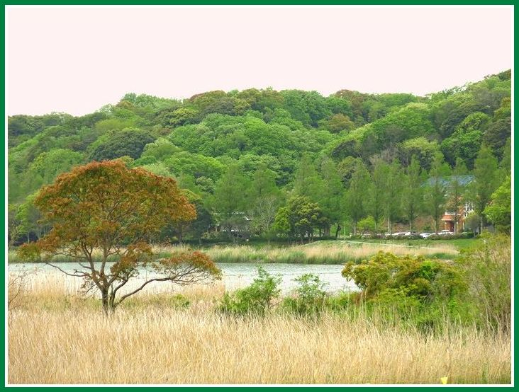 2014 4 22 佐鳴湖 北公園 新緑 1
