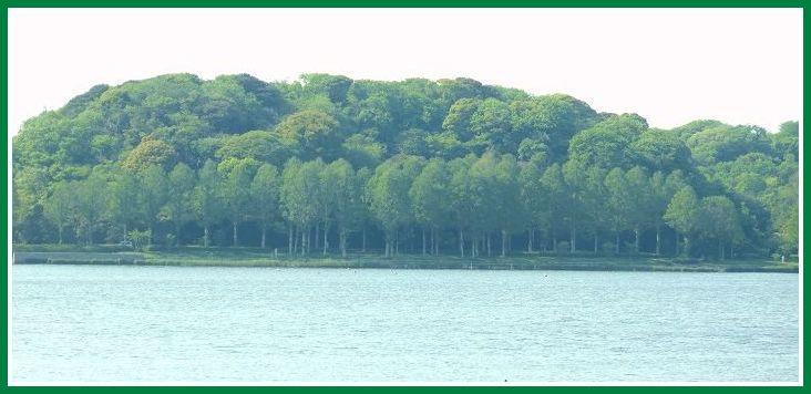 2014 4 24 佐鳴湖 西岸 新緑 1