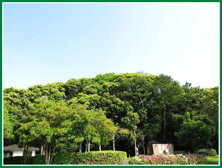 2014 4 24 佐鳴湖  西岸 新緑 3