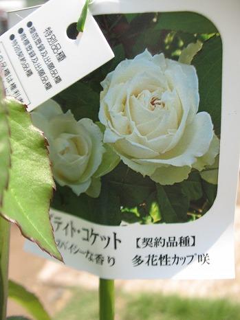 プティト・コケット (2)