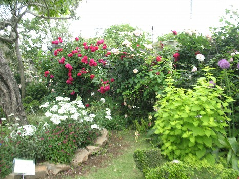 ガーデンカフェ (5)