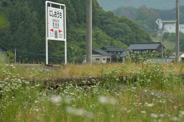 西相知駅の白い花(1)