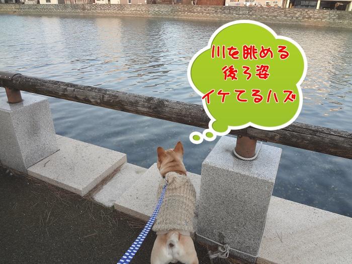 モグ散歩②