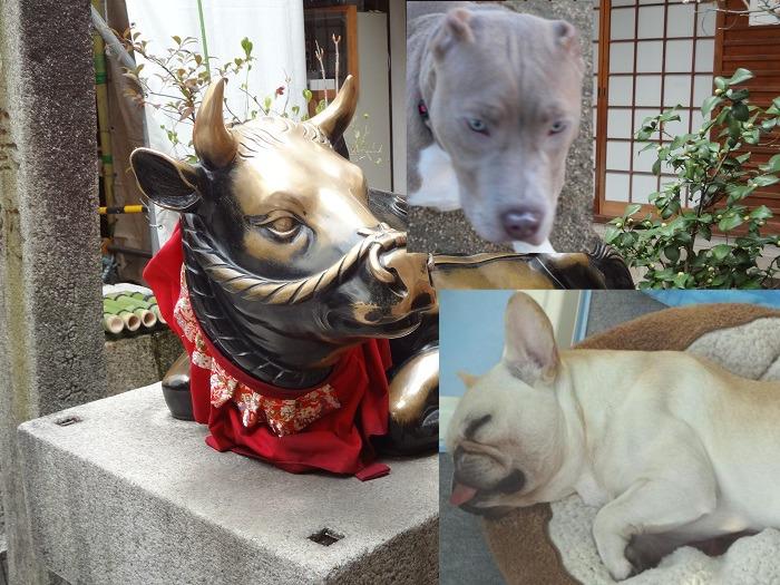 京都・サブ・ジーナ
