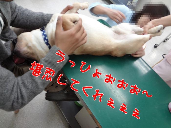 モグ・病院④