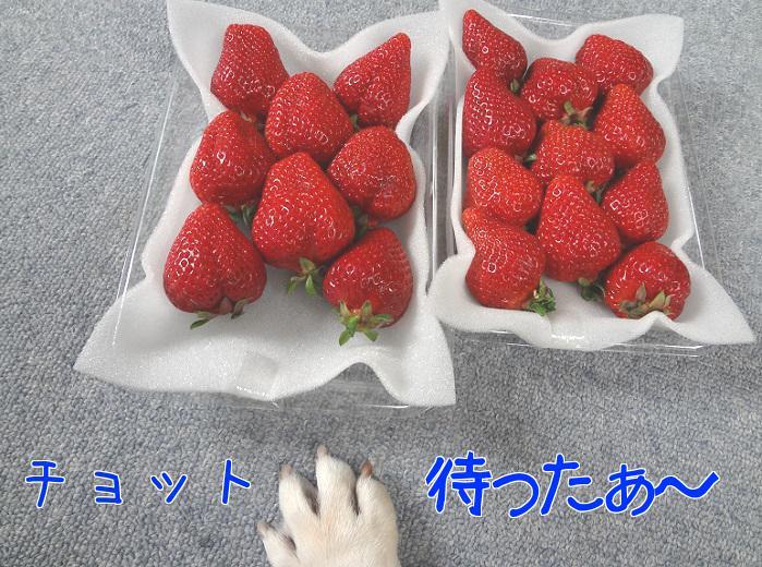 ジーナ苺3