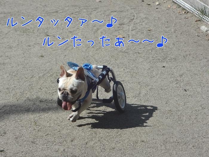 ぽっ歩ボール
