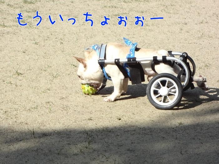 ぽっ歩ボール①