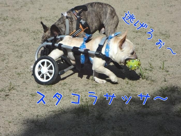 ぽっ歩ボール⑧