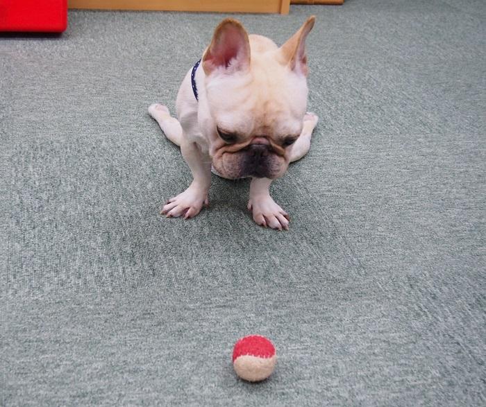 ボールおもちゃ