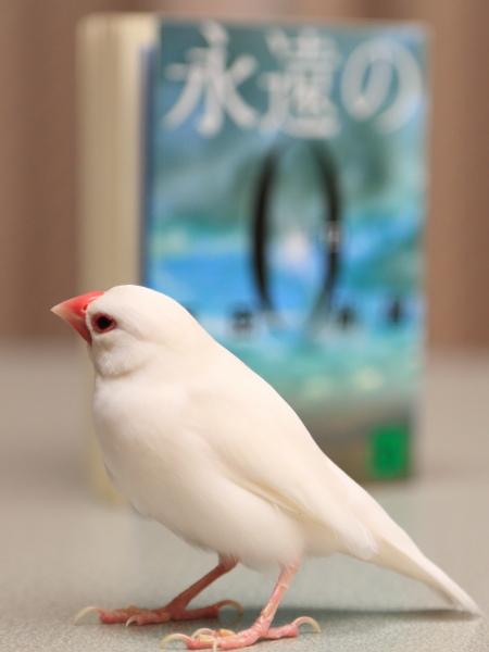 sirochannniha muzukasii kamo (2)