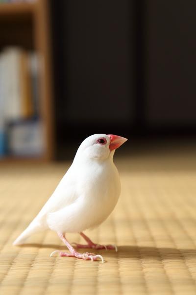 kekkyoku kotatuno houhe itta (2)