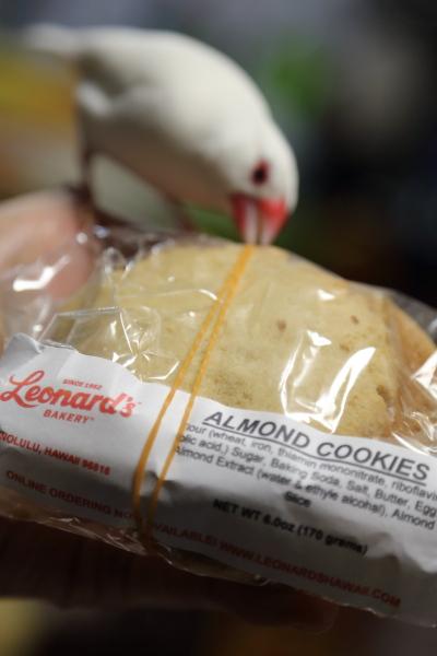 hawaii no omiyage cookies (3)