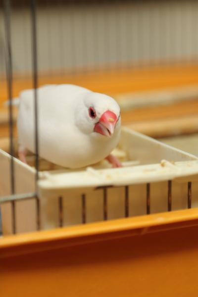 higoro taberenai monotte (1)