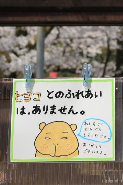 高岡古城公園桜満開 (7)