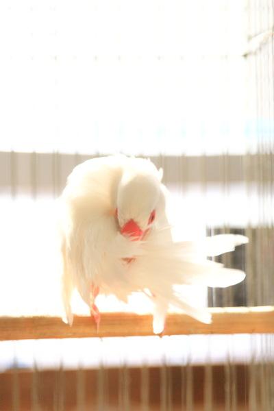 kyoumo asaburo (5)