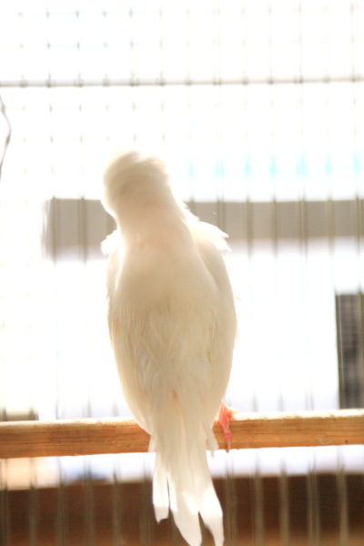 kyoumo asaburo (4)