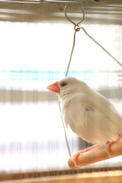 kyoumo asaburo (1)