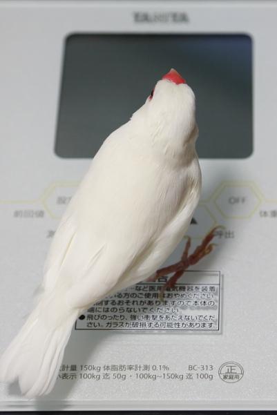 taisiboukei ni notte mita (1)