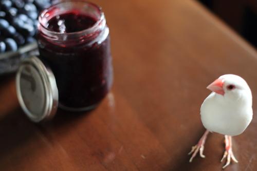 blueberry jam tukurimasita (2)