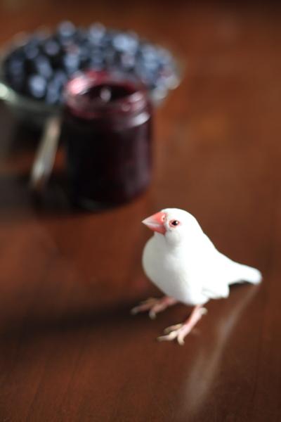 blueberry jam tukurimasita (1)