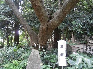 北野内尊桜