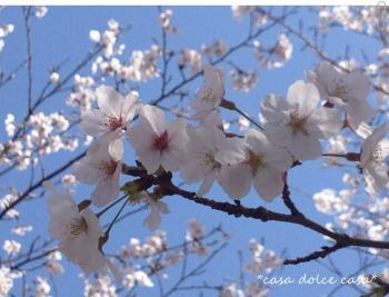 sakura_convert_20140422231451.jpg
