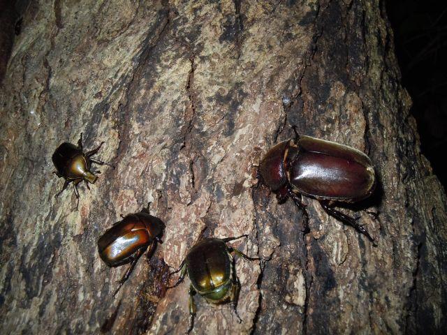 Beetle_6562.jpg