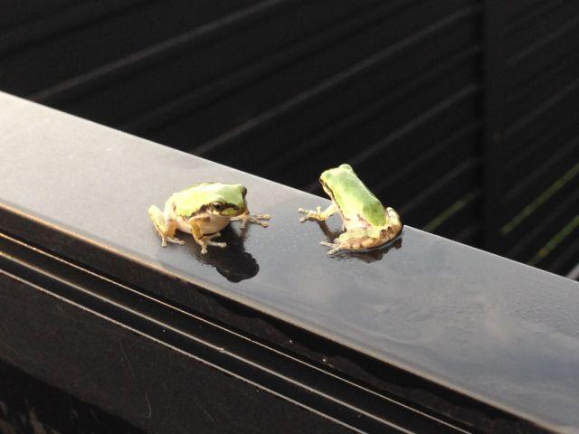 Frog_0446_1.jpg