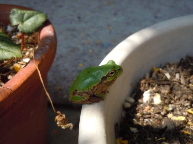 Frog_5235_1.jpg