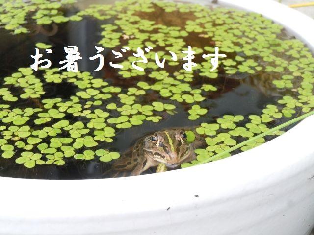 Frog_6751_2.jpg