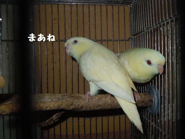 Saza_6761_2.jpg