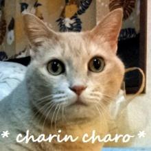 charinのブログ