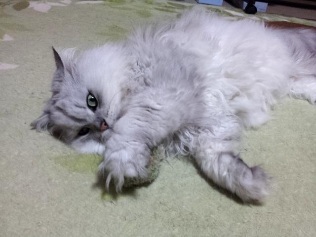 Charin * 毛糸とねこ^^
