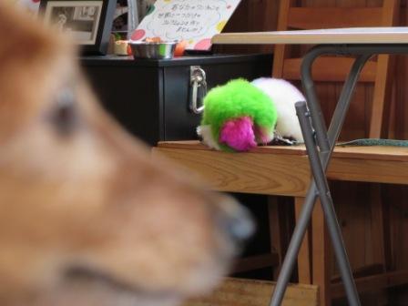 カラフル看板犬