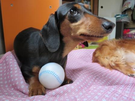 ボールでち♪