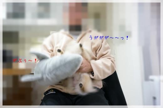 vsさめちゃん7 14-3