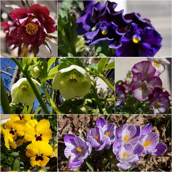 庭の花1 14-3