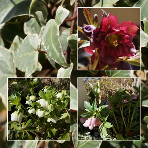 庭の花2 14-3