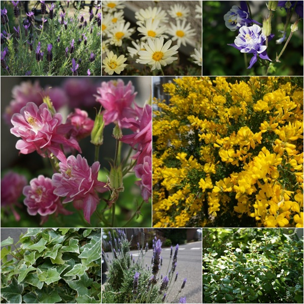 庭の花1 14-5