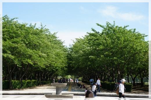 柏の葉公園1 14-6